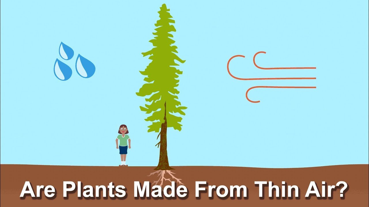 What Are Plants Made Of? | Ask A Biologist