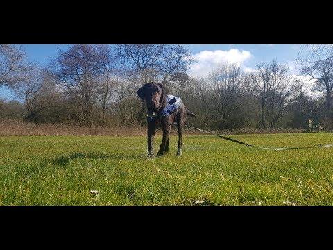 Poppy - Flatcoat Retriever - 3 Weeks Residential Dog Training