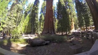 General Sherman Tree Trip