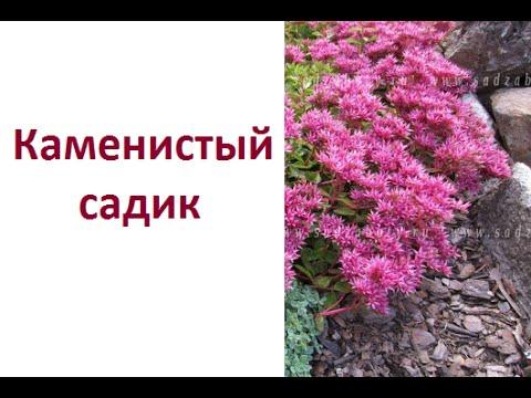видео: Каменистый садик из заросшей альпийской горки