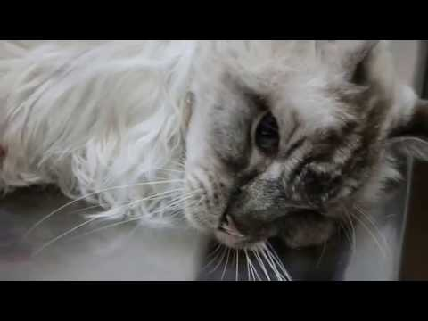 Emaciated Cat 15 Years Old eating NOTHING