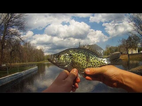 Bank Fishing A Small Pond For BEAUTIFUL Black Crappies + Bass | Voorhees, NJ |