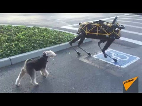 Thumbnail: Real Dog Meets Boston Dynamics Robot Dog for First Time