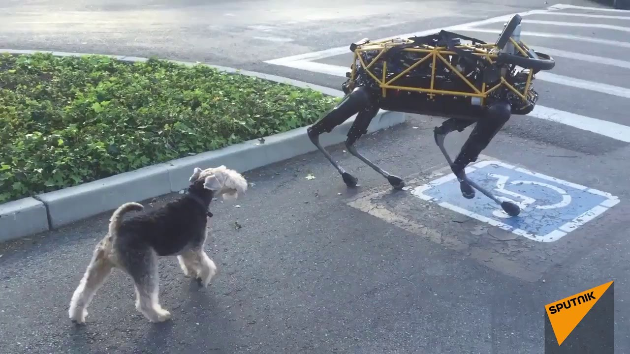 Real Dog Meets Boston Dynamics Robot Dog For First Time Youtube