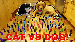 Puppy VS Cat Domino Obstacle Challenge!