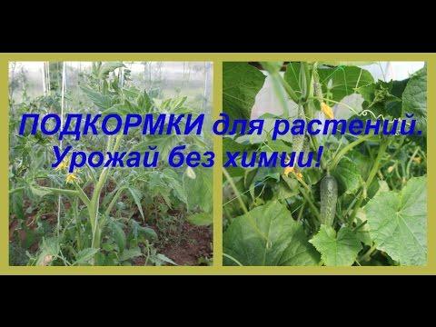 виды азотных удобрений для комнатных растений
