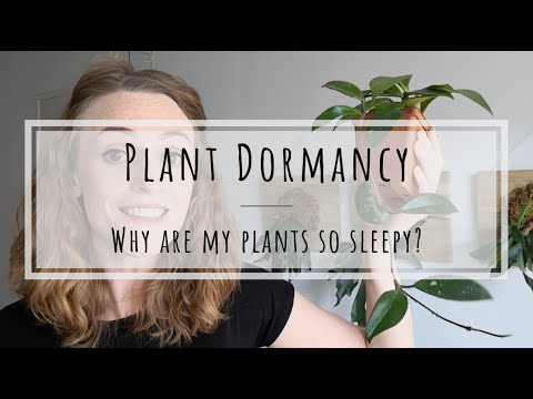 Plant dormancy: do houseplants go dormant?