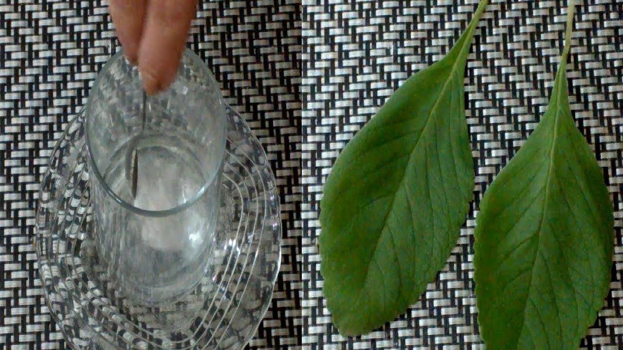 remedio caseiro bom para gases estomacais