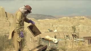 هذا الصباح-المرأة الأفغانية.. شهد العسل يزيل مرار الأيام
