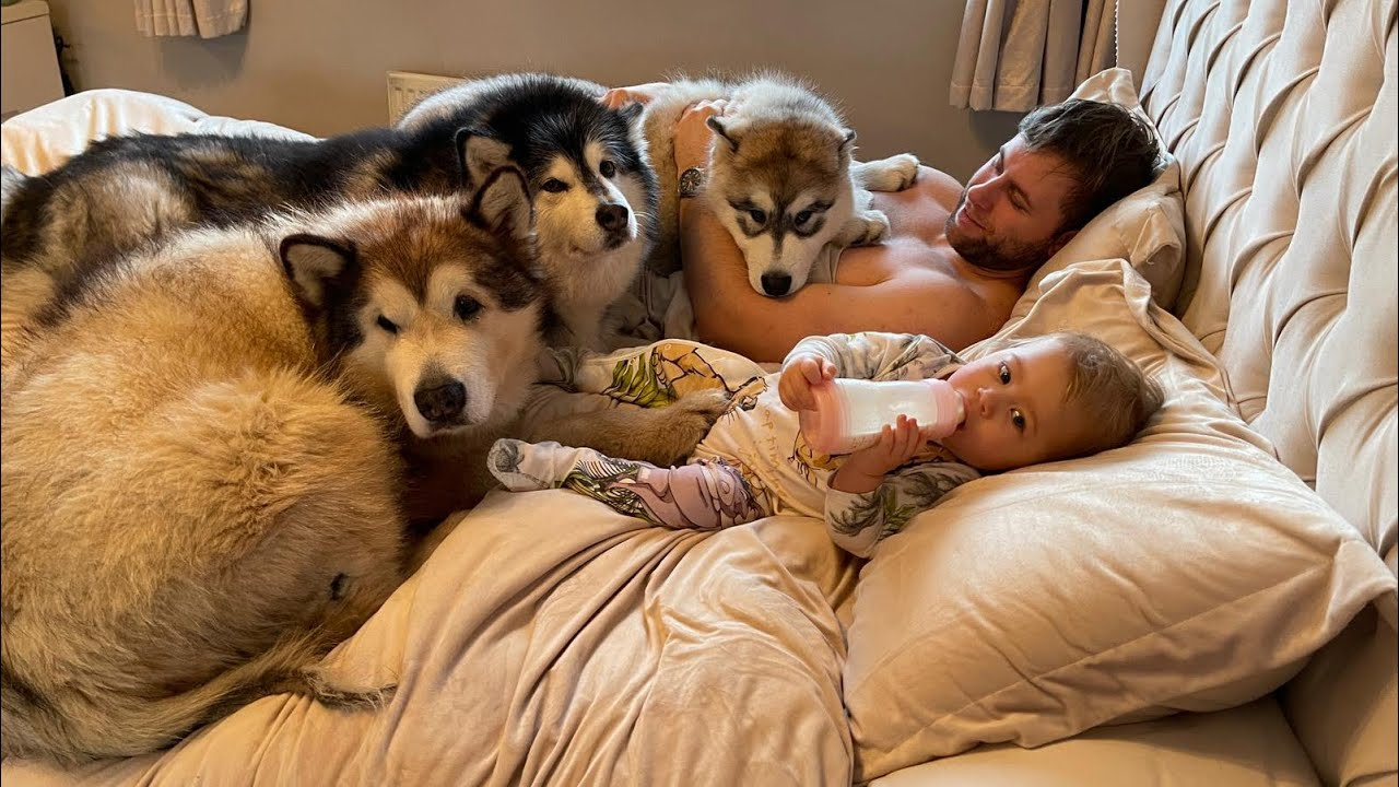 Our Morning Routine With 3 Giant Dogs A Cat And A Baby!! (SO CUTE!!)
