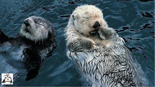 Cute Otter Video Compilation 2016