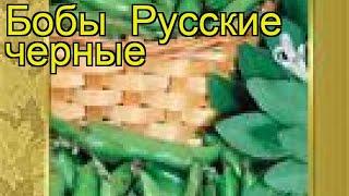 Бобы Русские черные. Краткий обзор, описание характеристик, где купить семена Russkie chernye