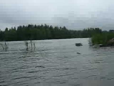 Fjortis- ja Akai veneilemässä @ Kangasala