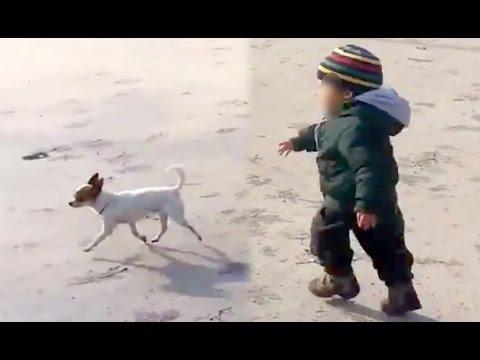 Kid chases chihuahua Pancho - tragic ending!