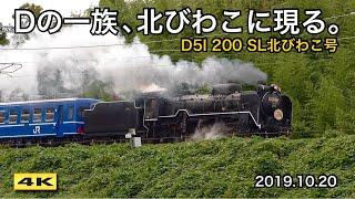 D51 200 SL北びわこ号 !!! デゴイチ、7ヶ月ぶり湖北路へ 2019.10.20【4K】