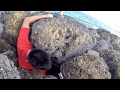 Rescuing a Tropical Fish from a ROCKY Grave!!! (Beach Fishing in the Bahamas)