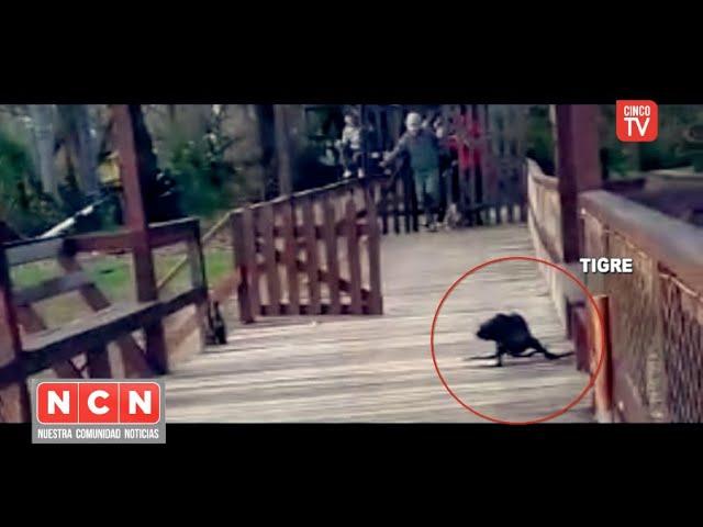 CINCO TV - Defensa Civil y el Centro de Operaciones Tigre colaboró en el rescate de un lobo marino