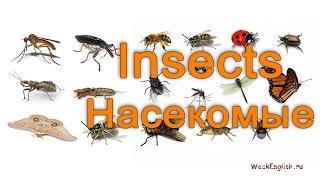 Насекомые на английском языке.  English Vocabulary - Insects
