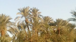 Beauty Of Bannu