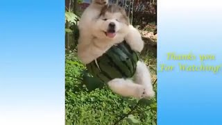Funny Animals and Cute Pets Compilation 2020