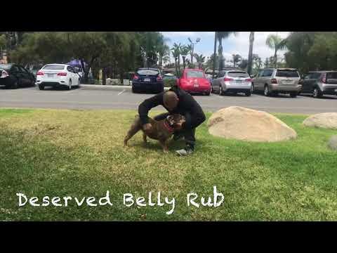Winston | English Bulldog | Hollywood Hills, CA