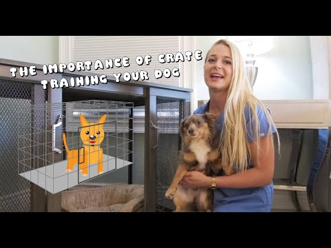 the-importance-of-crate-training-your-dog!!-|-my-dogs-destroy-my-house