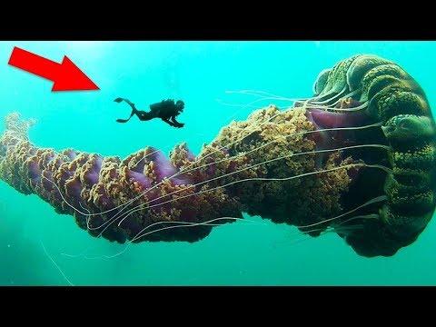 7 Самых опасных видов медуз