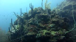 Diving in Saint Vincent - Troumaca Bay - April 2015