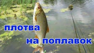 Рыбалка. Плотва на поплавок