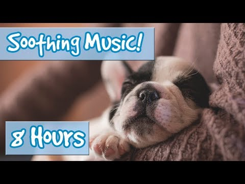 Calm Your Hyperactive Dog! Soothing Music to Help Your Anxious or Nervous Dog Become Calm and Quiet!