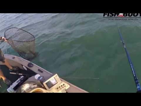 FISHBUOY Official - Muskellunge, Lake St. Clair
