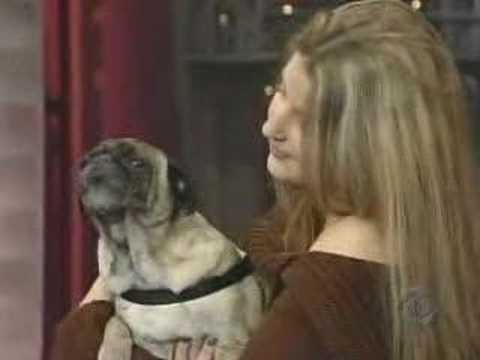Odie the Pug - 'I Love You' (Late Show with David Letterman)