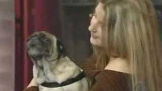 "Odie The Pug - ""i Love You"" (late Show With David Letterman)"