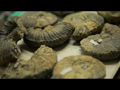 Paleontología: Amonites