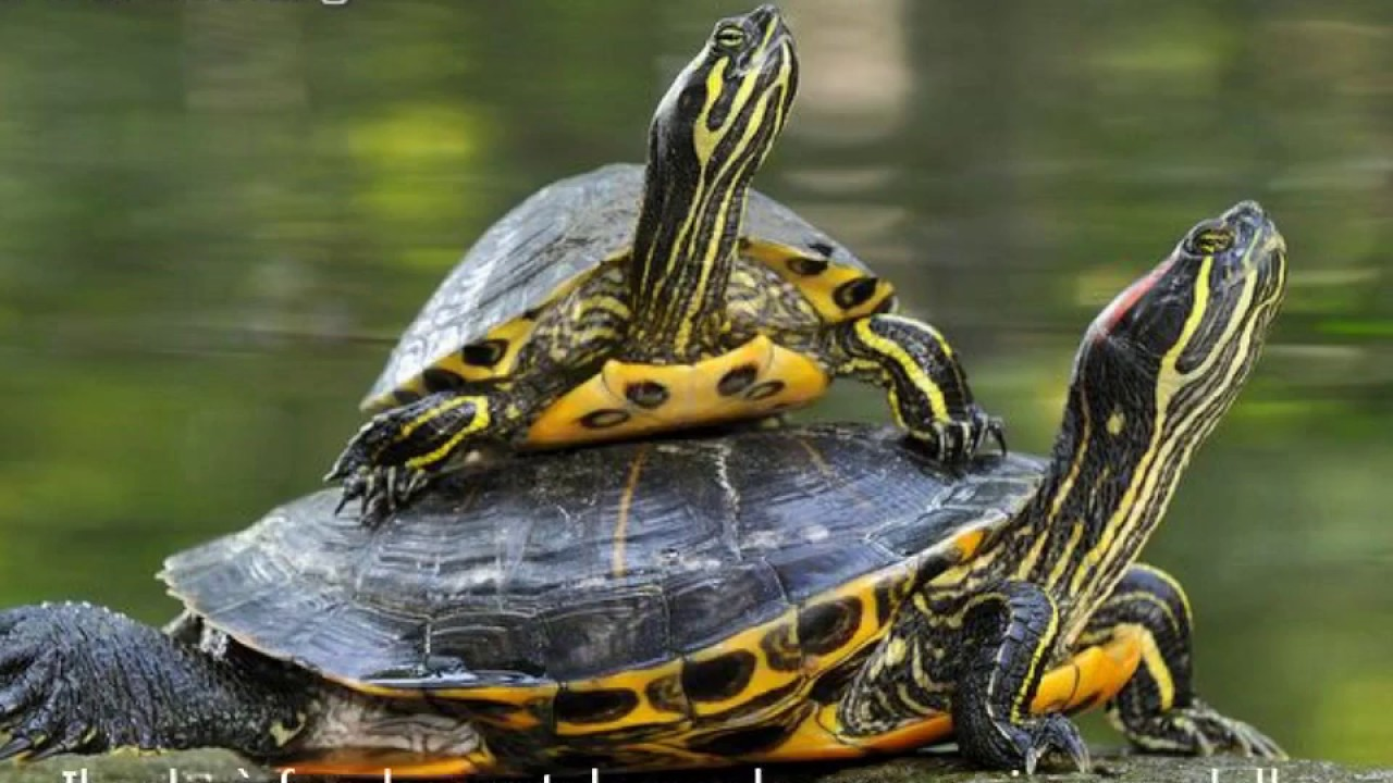 cinque consigli per il benessere delle tartarughe