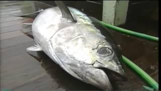 Tuna Longline Fishing
