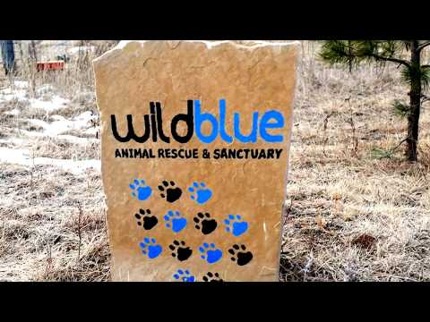 Donate – Wild Blue Cats