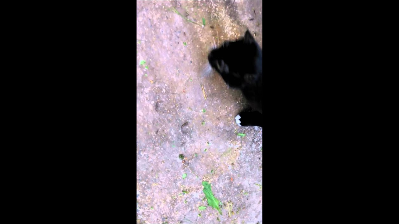 Кот собака лиса ящерица