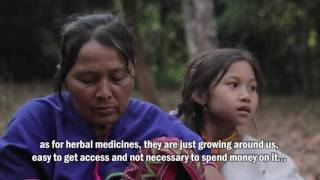 The Kheshorter: Indigenous Karen's Community Forest (English subtitle)