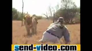 Alpha Male Body Language Man vs Lion