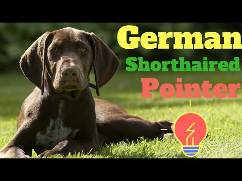 German Shorthaired Pointer | amazing facts in hindi | Animal Channel Hindi