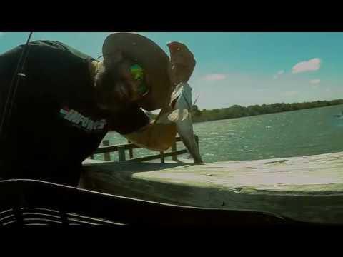 FISHING FLORIDA..... VENICE BEACH/GULF COAST