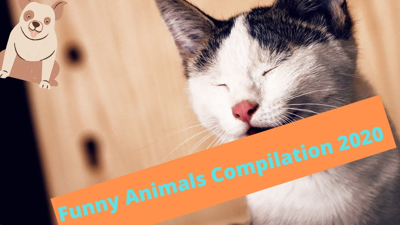 Funny Animals video Compilation 2020/Смешные животные 2020