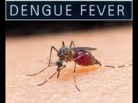 dengue in tagalog version Play, streaming, watch and download dengue jingle video  thank you for watching the popular dengue jingle you can call the dengue  dengue fever tagalog version.
