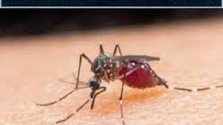Dengue Fever: Effective Treatment - by Doc Richard Mata
