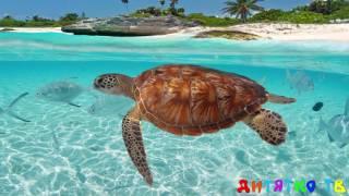 Подводный мир для самых маленьких Учим подводный мир Животные для детей видео Развивающие мультики