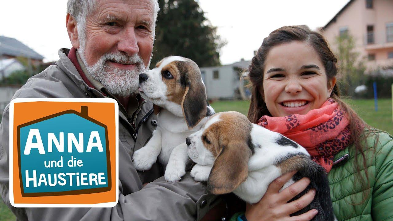 Ein Tag In Der Hundeschule Information Fur Kinder Anna Und Die Haustiere Spezial Youtube