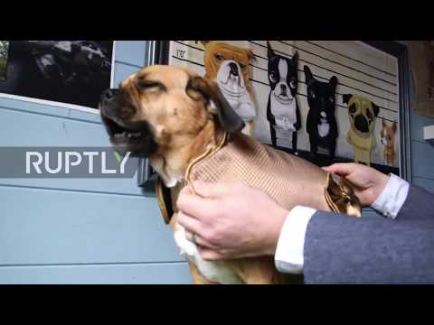 UK: Doggy style! Meet the makers of a 24 carat gold jacket for pups