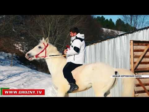 Рамзан Кадыров совершил конную прогулку по горным склонам Ножай-Юртовского района