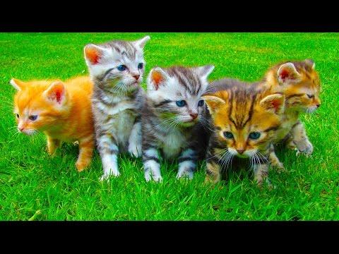 Смешные кошки приколы про кошек и котов 2017 #22 (старое и